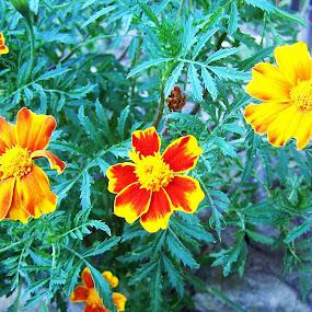 by Bogdan Ene - Flowers Flower Gardens (  )