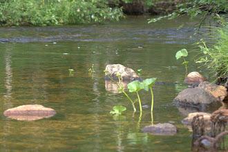 Photo: Kutsajoen kirkasta vettä