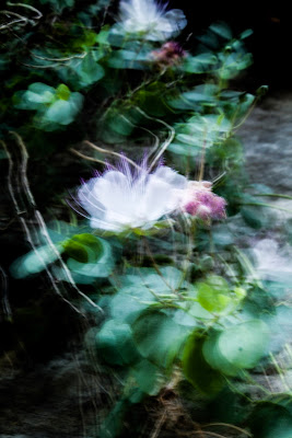 Out of focus di arianna_tammone