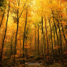 Photo: Big Dreamers Never Sleep ! The saga continues !  See more on the blog : http://www.naturephotographie.com As always, I appreciate your comments and am extremely grateful for your support !  Enjoy, Philippe  #fallphotos #autumnphotography #naturephotography #photography