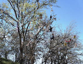 Photo: The bra tree along CA Route 198