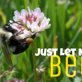 Let Me Bee :) by Dorothy Day - Typography Captioned Photos ( nature, humour, bee, caption, flower )