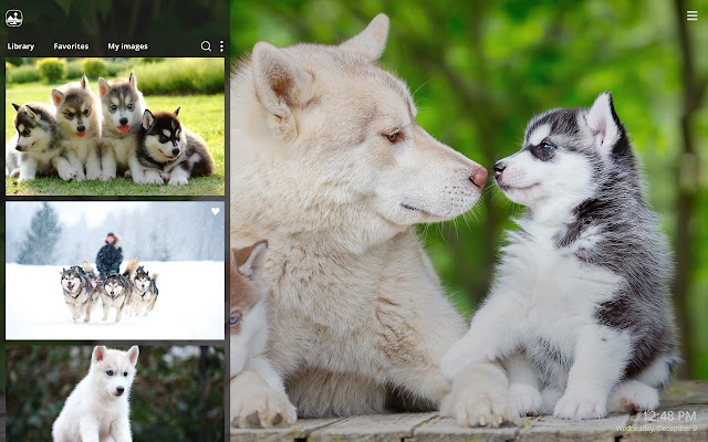 My Husky Cute Dog Puppy Hd Wallpapers