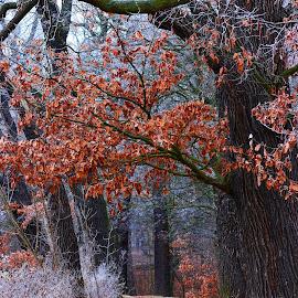 podzim  by Jarka Hk - Landscapes Forests ( forest, nature, autumn, trees, walk )