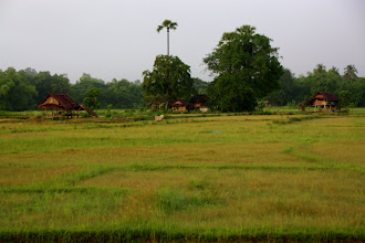 Photo: Day 333 - View of Rice Fields a Few Kms Out of Thoen