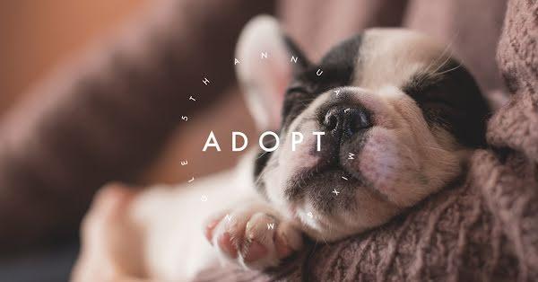 Adoption Mix & Mingle - Facebook Event Cover Template