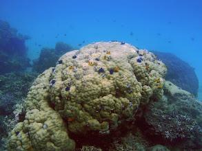 Photo: Christmas Tree Worm Rock, Naigani Island, Fiji