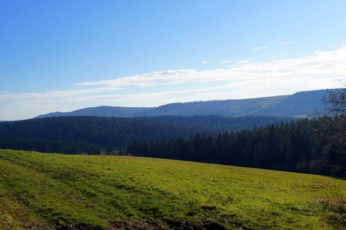 Ostrym Działem do rezerwatu Cisy w serednicy, ścieżka dydaktyczno-przyrodnicza,