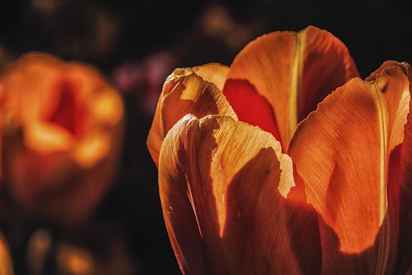Esplosione arancio di Alessandro Zaniboni Ph