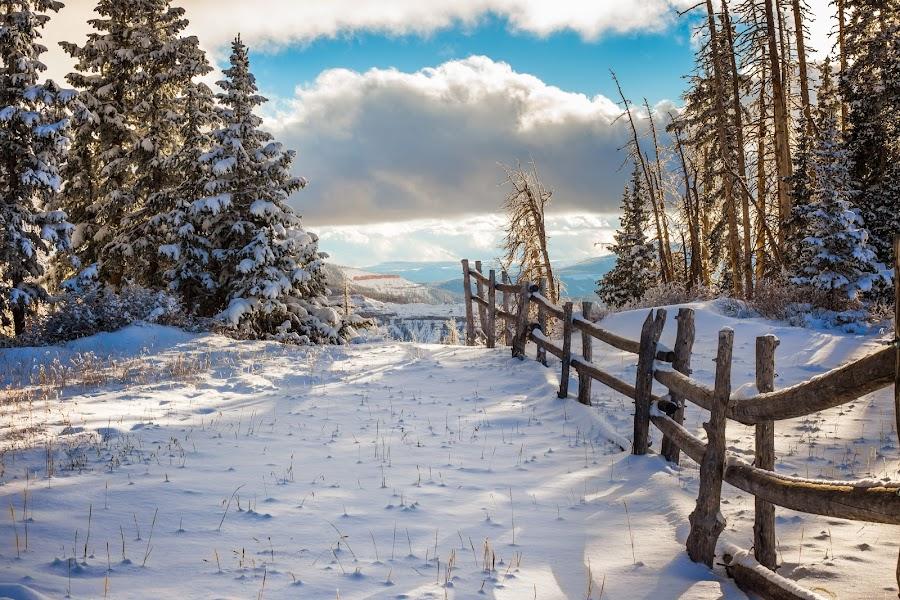 Winter Scene by Shane Egan - Landscapes Weather ( fence, winter, snow, log fence, scene, landscapes,  )