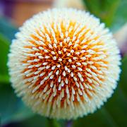 Stunning Flower Backgrounds