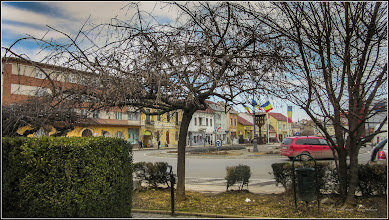 Photo: Arțar, Paltin de munte - (Acer pseudoplatanus) - din Piata 1 Decembrie 198, parc - 24.febr.2017