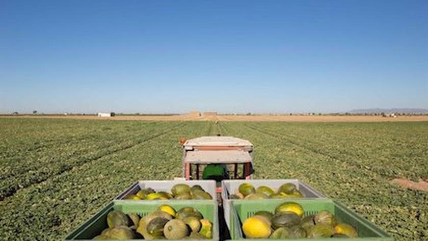 Dos empresas de Almería concentran la venta a la cadena se supermercados.