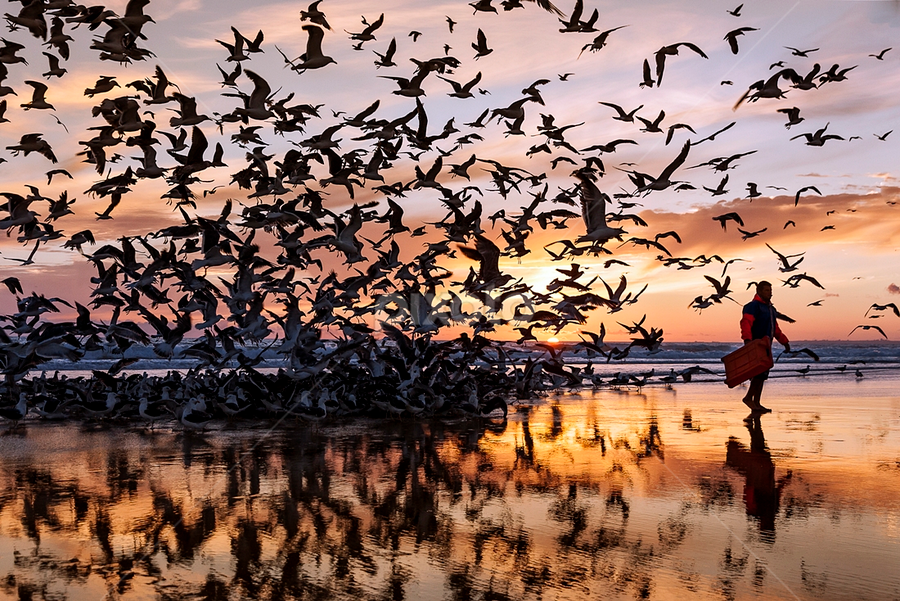 gulls attack by António Leão de Sousa - Animals Birds ( beaches, arte xávega, costa de caparica, sunset, sea, reflex, , reflection, reflections, mirror )