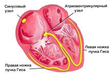 Особенности внутрижелудочковой проводимости что это
