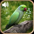 Latest Bird Ringtones 2018 download