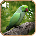 Latest Bird Ringtones 2018 APK