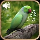 Latest Bird Ringtones 2018 icon