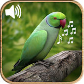 Latest Bird Ringtones 2016
