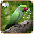 Latest Bird Ringtones 20  file APK for Gaming PC/PS3/PS4 Smart TV