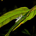 John Deere Grasshopper