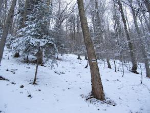 Photo: 18.Podejście na Śnieżnicę. Bardzo stromo i nie przetarte. Na szczęście śniegu jest mało i jest zmrożony, więc nie utrudnia zbytnio podejścia.