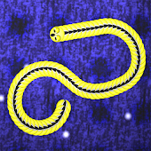 Snaking Snake Mutiplayer