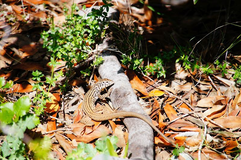 Photo: This little guy was sorta cool... but not the coolest reptile of the trip.