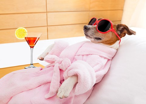 Doggy Day Care: The London Hotel Offering Spa Treatments for Dogs ...