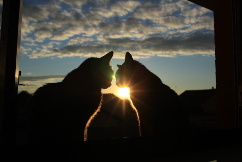 tramonto romantico di phototriba
