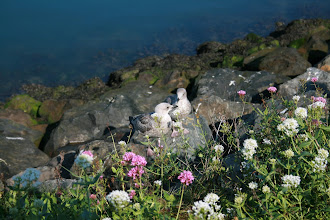 Photo: The wild land of Howth Harbour