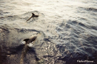 Photo: #DOLPHINS!!! Swan along with our scuba boat. You could hear them talking to each other! So exciting!!!
