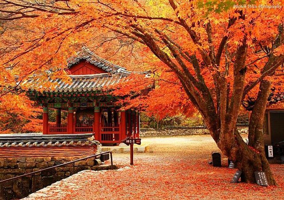 Lá đỏ bao phủ cả thành phố Seoul rộng lớn