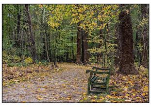 Photo: Nederland - Natuur- bos in de herfst Foto: Bert Morsink