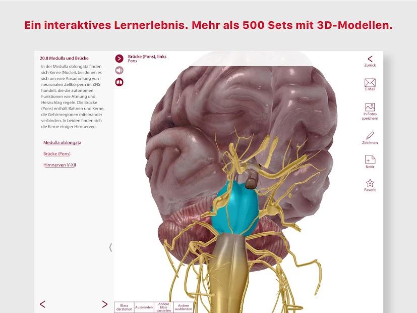 Wunderbar Studium Der Anatomie Und Physiologie Online Zeitgenössisch ...