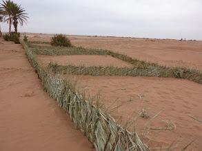 Photo: Technische palmtakken haag als voorbereiding voor boomplant actie