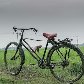 man at work by Bishal Ranamagar - Transportation Bicycles ( rice, farmer, paddy, paddyfield, bicycle, nepal )
