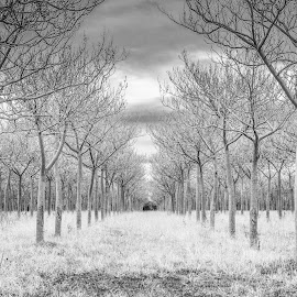 Symmetry by Barbara Scott - Black & White Landscapes ( trail, symmetry, winter, black and white, trees )