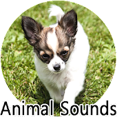real animal sounds