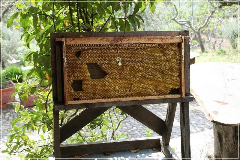 Aula Museo Abejas del Valle, o museu das abelhas