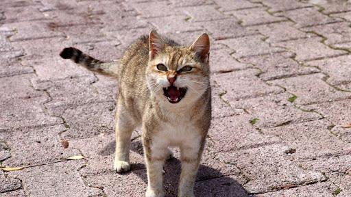 Cute Cat Live Wallpaper: fondos de pantalla hd capturas de pantalla 4