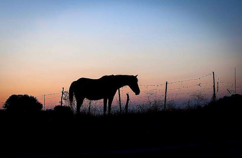 black horse di piperitas