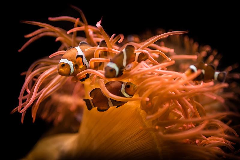 Nemo and Friends di Rino Lio