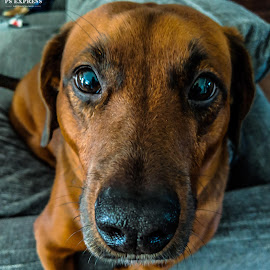 Rubble by Kevin Bittner - Instagram & Mobile Android ( close up, dog )