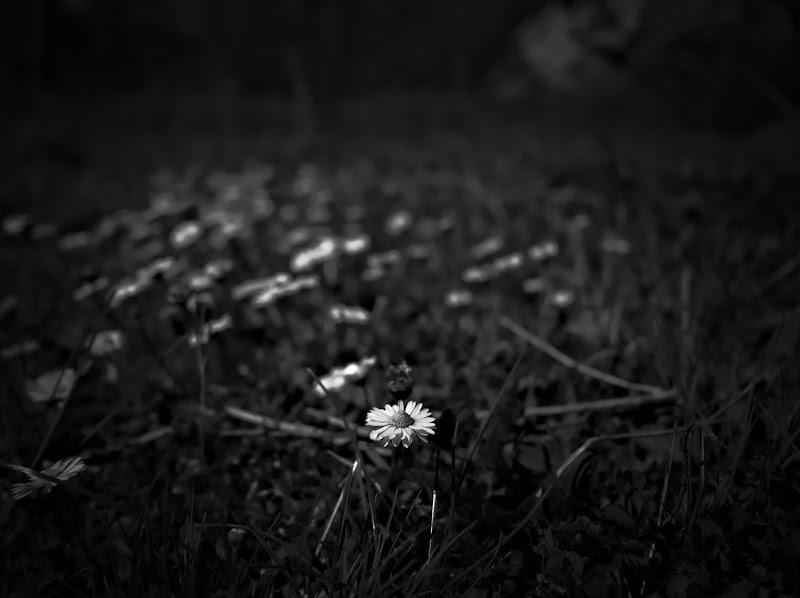Dark Spring  di Bat21