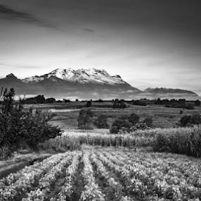 Iztaccíhuatl Volcano and flowers field by Cristobal Garciaferro Rubio - Black & White Landscapes ( field, flower field, volcano, mexico, puebla, iztaccihuatl )