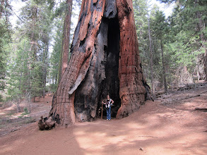 Photo: At the Mariposa Grove in Yosemite, Easter 2014