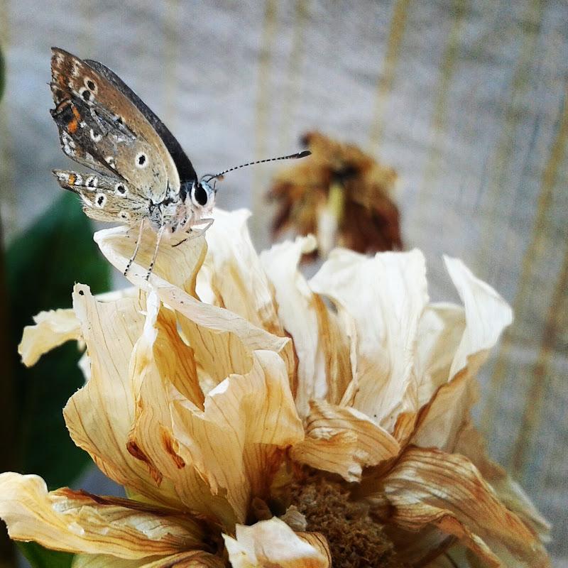 E non esiste farfalla senza un proprio fiore... di _Chiara_