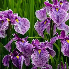 Purple Explosion  by Deborah Lucia - Flowers Flowers in the Wild ( flower_garden, purple, florals, flowers )