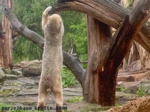 Photo: Knut macht sich lang und untersucht seinen Baum ;-)